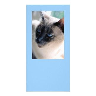 Aloof Siamese Cat Photo Card
