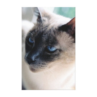 Aloof Siamese Cat Wrapped Canvas