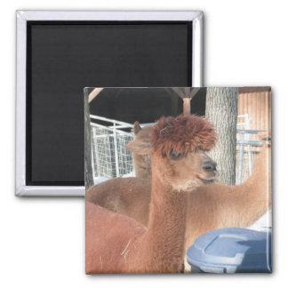 Alpaca 2 Inch Square Magnet