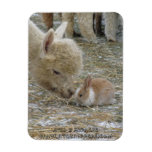 Alpaca and Bunny Kisses! Rectangular Photo Magnet