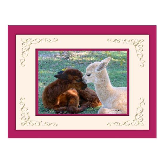 Alpaca Baby Love Valentine Postcard