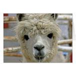 Alpaca Birthday Greeting Card