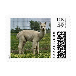 Alpaca blanca Cria Sello Postal