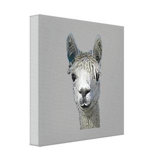 Alpaca Gallery Wrapped Canvas