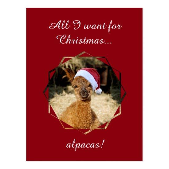 Alpaca Christmas Postcards