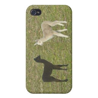 Alpaca Cria iPhone 4 Fundas