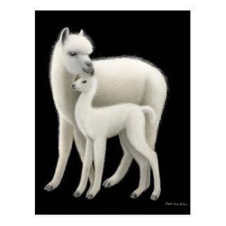 Alpaca & Cria Postcard
