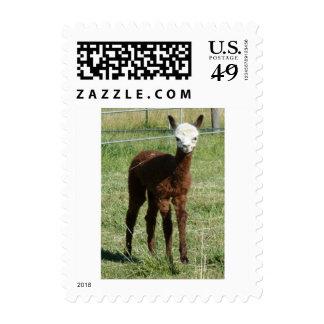 Alpaca Cria Sello Postal