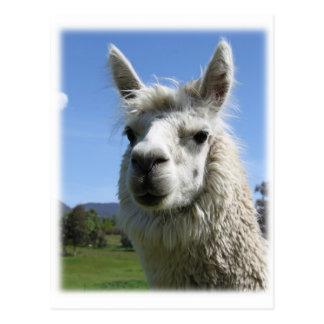 Alpaca de Alicia Tarjeta Postal