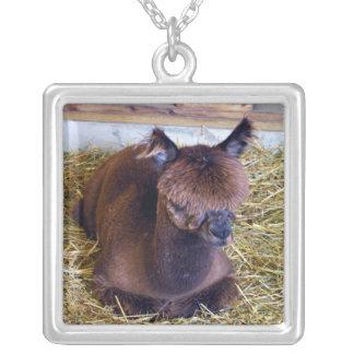 Alpaca de Brown Colgante Cuadrado