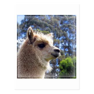 Alpaca de Emily Postales