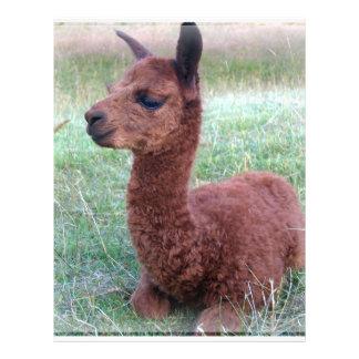 Alpaca de Hannah del bebé Tarjetones