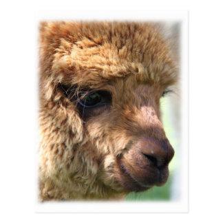 Alpaca de Hannah Postales