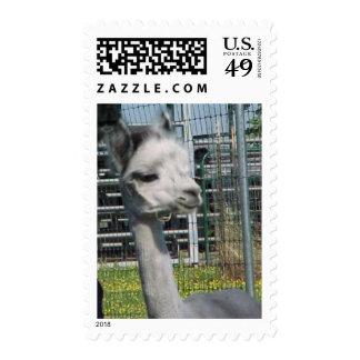 Alpaca de los gris plateados sellos postales