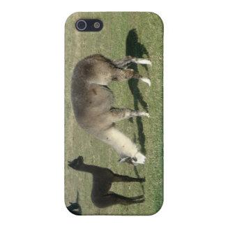 Alpaca de plata y su cria I iPhone 5 Carcasa