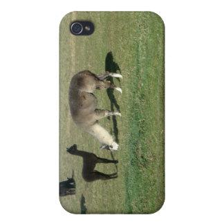 Alpaca de plata y su cria iPhone 4 carcasa