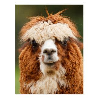Alpaca divertida con los dientes grandes tarjetas postales