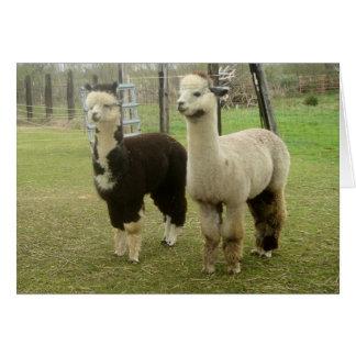 Alpaca Duo Card
