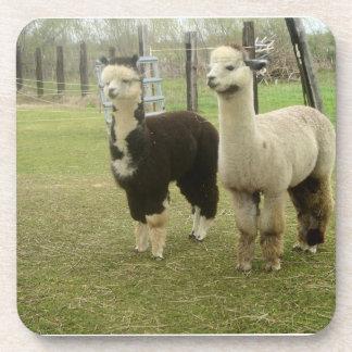 Alpaca Duo Drink Coasters