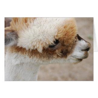 Alpaca el duque tarjeta de felicitación