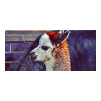 Alpaca en el parque zoológico tarjeta publicitaria a todo color