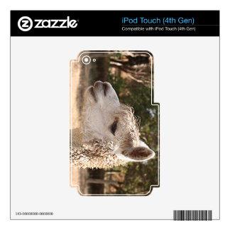 Alpaca en granja iPod touch 4G calcomanía