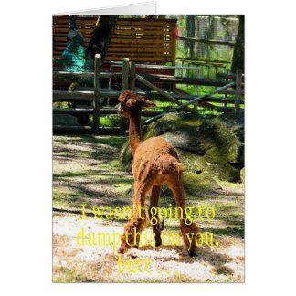 Alpaca fun stationery note card
