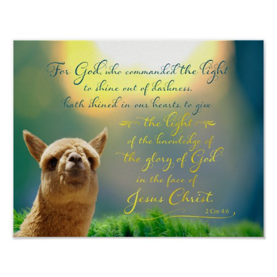 Alpaca Gold Teal Bible Quote Poster