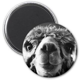 Alpaca Imán Redondo 5 Cm