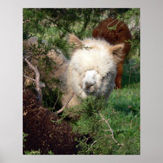Alpaca in Cedar Print