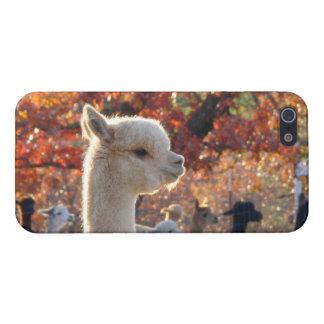 alpaca Isabel del caso del iPhone 5 iPhone 5 Fundas