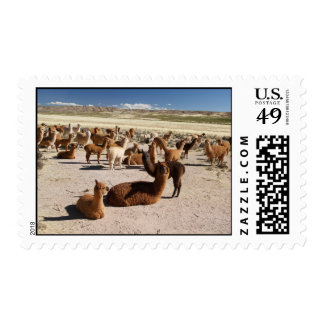 Alpaca Llama Herd Pack in Bolivia Andes Mountains Postage