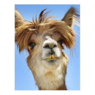 Alpaca loca del pelo postales
