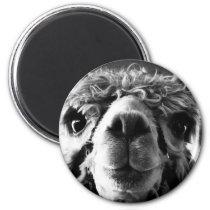Alpaca Magnet