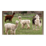 Alpaca Melange ~ biz card Double-Sided Standard Business Cards (Pack Of 100)