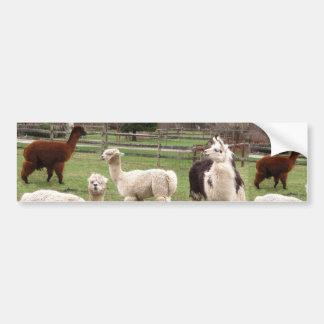 Alpaca Melange ~ Bumper Sticker Car Bumper Sticker