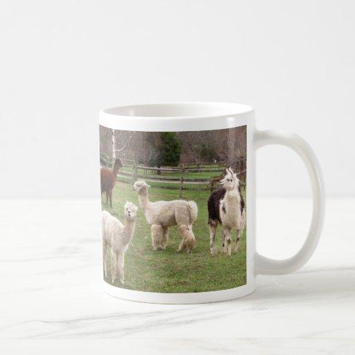 Alpaca Melange ~ mug