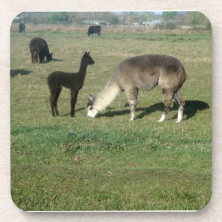 Alpaca Mom and Cria Beverage Coasters