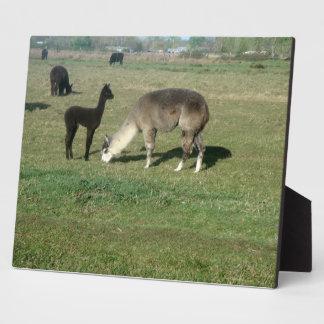Alpaca Mom and Cria Photo Plaque