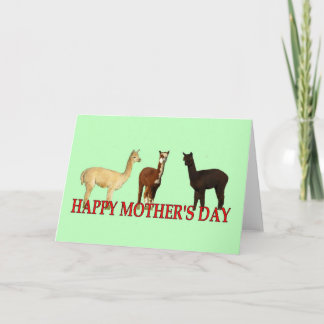 Alpaca Mother's Day Card