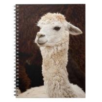 Alpaca Notebook