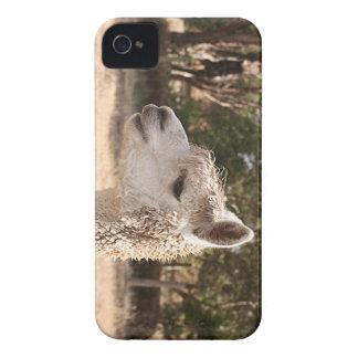 Alpaca on farm iPhone 4 covers