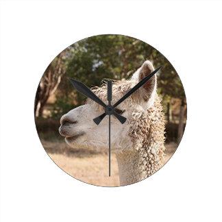 Alpaca on farm round clock