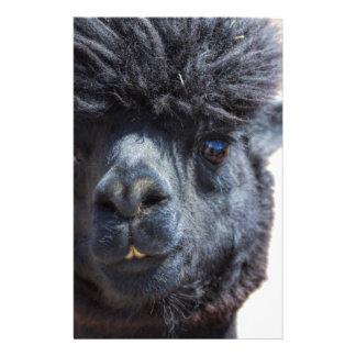 Alpaca peruana con el pelo loco papeleria de diseño