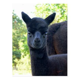 Alpaca Petite Syrah Postcard