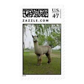 Alpaca postage
