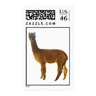 Alpaca Postage Stamp