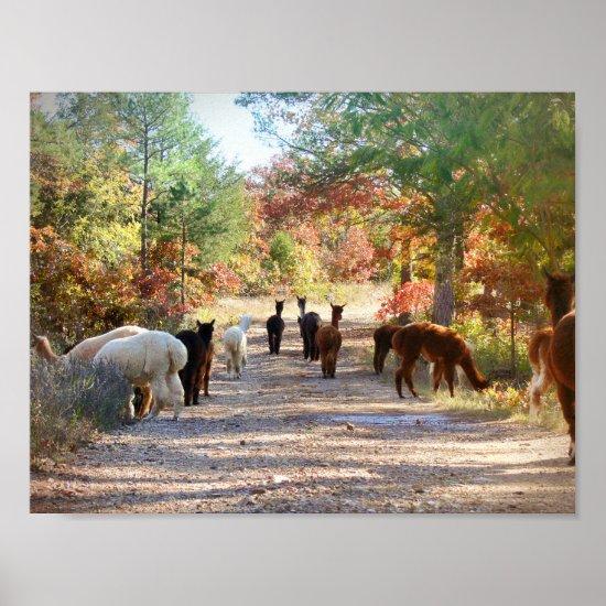Alpaca Poster Autumn