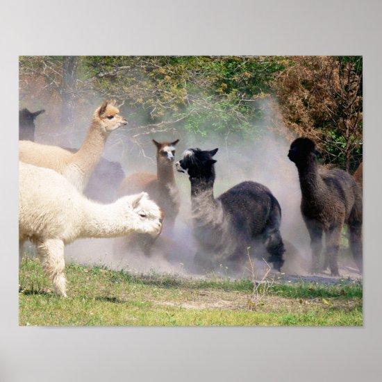 Alpaca Poster Rolling