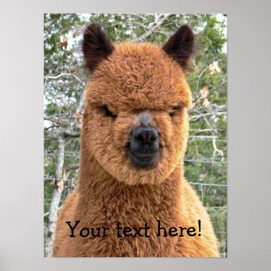 Alpaca Posters